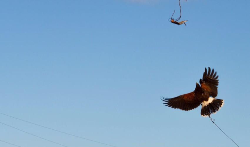 bird control sardegna